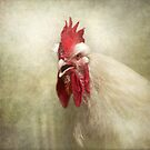 Portrait of a Chicken.. by polly470