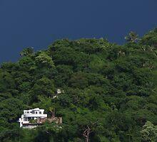 Jungle's Green Tints - Difumados Verde De La Selva by Bernhard Matejka