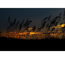 Sea Oats  Photographic Print