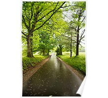 Wet Black Road with Trees Poster