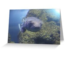 """Puffer Fish""  by Carter L. Shepard Greeting Card"