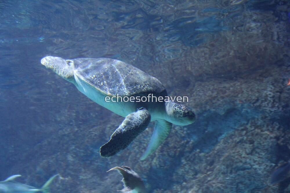 """""""Sea Turtle""""  by Carter L. Shepard by echoesofheaven"""