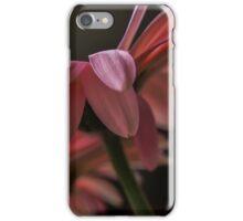 Pink Gerberas iPhone Case/Skin
