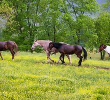 Riding Horses - Cades Cove, Smoky Mountain National Park by Mike Koenig