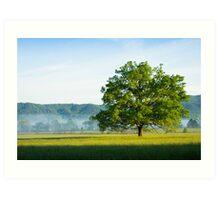 Mighty Oak Tree - Cades Cove, Smoky Mountains National Park Art Print