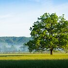 Mighty Oak Tree - Cades Cove, Smoky Mountains National Park by Mike Koenig