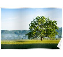 Mighty Oak Tree - Cades Cove, Smoky Mountains National Park Poster