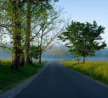 Country Road in the Morning, Cades Cove, Smoky Mountains National Park by Mike Koenig