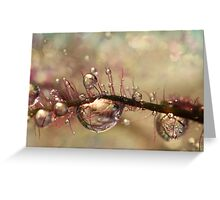 Smokey Drops Greeting Card