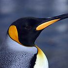 King Penguin by rosepetal2012