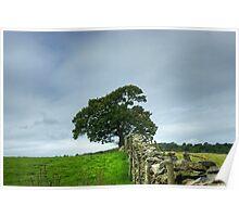 The Finsthwaite Tree Poster