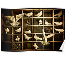 Pigeon Holed Poster