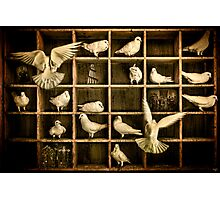 Pigeon Holed Photographic Print