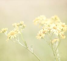A Field of Yellow Flowers by Nicola  Pearson