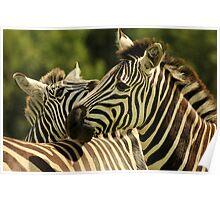 Stripy 'oss Poster