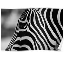 Black with white stripes, or white with black? Poster
