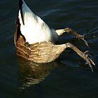 Invert-A-Bird by Sheri Bawtinheimer