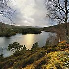 Glen Affric by jacqi