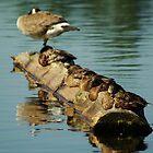 Duck Duck Goose by Sheri Bawtinheimer