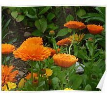 Colours Of Autumn For Brenda Poster