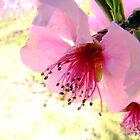 Peach Blossom by Eva Kato