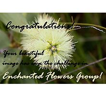 Enchanted Flowers, Challenge Winner Banner Photographic Print