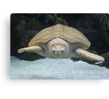 """Sea Turtle 2""  by Carter L. Shepard Canvas Print"