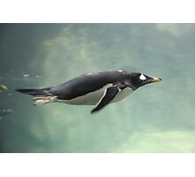 """Swimming Penguin""  by Carter L. Shepard Photographic Print"