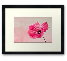 Pink Two Toned Lavatera  Framed Print