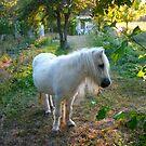 Pony by Neutro