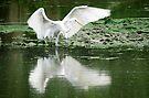 Egret by Veronica Schultz