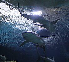 """Sharks""  by Carter L. Shepard by echoesofheaven"