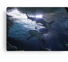 """Sharks""  by Carter L. Shepard Canvas Print"