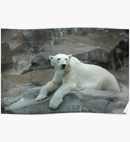 """Polar Bear""  by Carter L. Shepard Poster"