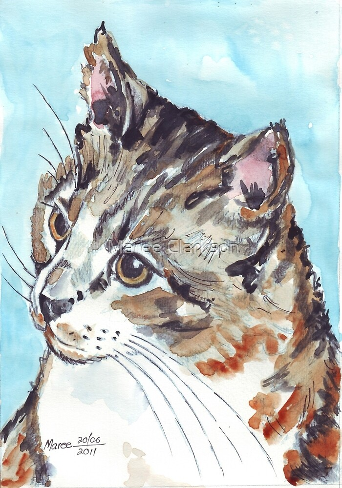 A Tabby superb! by Maree Clarkson
