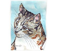A Tabby superb! Poster