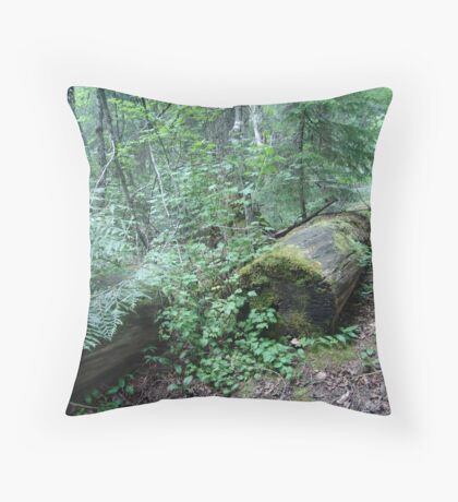 TRAIL OF THE CEDARS, GLACIER NATIONAL PARK Throw Pillow