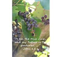 """John 15:1""  by Carter L. Shepard Photographic Print"