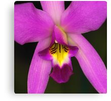 Bright Orchid Canvas Print