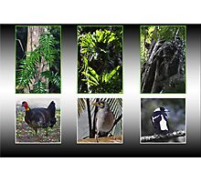 Biodiversity in Caldera Photographic Print