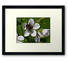 flower buffet  Framed Print
