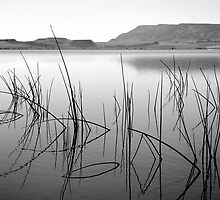 desert morning... by Allan  Erickson
