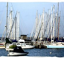 In a Safe Haven - Williamstown,Vic by EdsMum