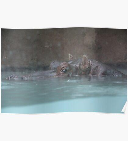 """Hippopotamus""  by Carter L. Shepard Poster"