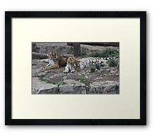"""Tigers""  by Carter L. Shepard Framed Print"