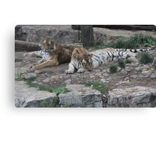 """""""Tigers""""  by Carter L. Shepard Canvas Print"""