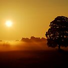 """""""GOLDEN LIGHT OF DAWN"""" by snapitnc"""