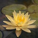 Pale yellow lily by Celeste Mookherjee