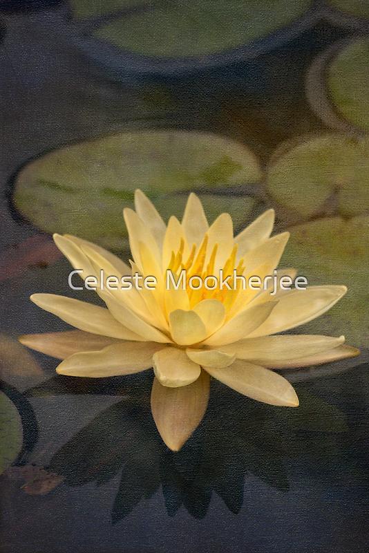 Pale yellow lily by Celeste Mookherjee