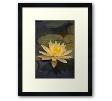 Pale yellow lily Framed Print